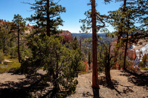 18-Mile Scenic Drive Swamp Canyon Overlook at Bryce Canyon National Park #vezzaniphotography