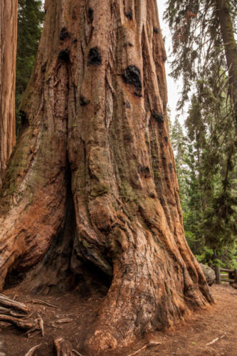 Sequoia National Park, CA #vezzaniphotography